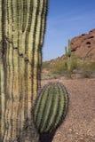 Arizona Desert Landscape Red Rocks with Cactus Stock Photo