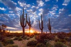 Free Arizona Desert Landscape With Saguaro Cactus At Sunset Royalty Free Stock Photos - 174256638