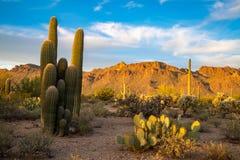 Arizona Desert Landscapes. Amazing and interesting landscapes from Arizona USA Royalty Free Stock Image