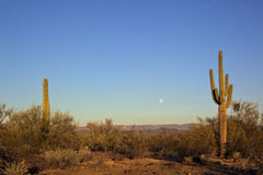 Arizona Desert and Moon Royalty Free Stock Image