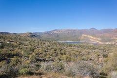 Arizona Desert n Bloom Stock Image