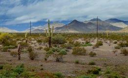 Arizona desert panorama landscape in saguaro cactus. And Black Mountain stock images