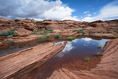 Arizona Desert Pond Stock Images
