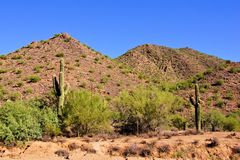 Arizona desert Stock Image