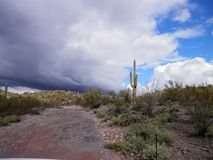 Arizona desert. Saguaro in winter storm Stock Photo