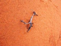 Arizona desert scene Stock Photos