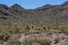 Arizona Desert Scenery Stock Photography