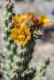 Arizona Desert Scenery royalty free stock images