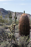 Arizona Desert Scenery Royalty Free Stock Photos