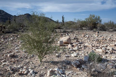 Arizona Desert Scenery Stock Image