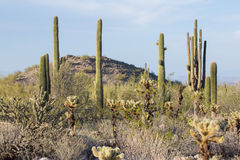 Arizona Desert Scenery Royalty Free Stock Photography