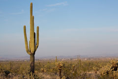 Arizona Desert Scenery Royalty Free Stock Photo