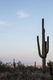 Arizona Desert Scenery Royalty Free Stock Image