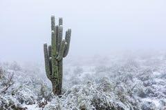 Arizona desert snow with Saguaro cactus. Arizona desert snow with Saguaro cactus and winter landscape royalty free stock photo