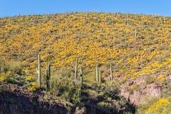 Arizona Desert in Spring Royalty Free Stock Photos