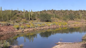 Arizona Desert in Spring stock video
