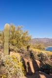 Arizona Desert Spring Wildflowers Stock Photo