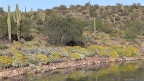 Arizona Desert in Springtime stock footage