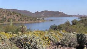Arizona Desert in Springtime stock video