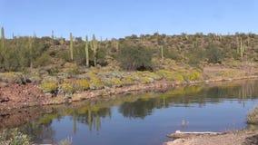 Arizona Desert in Springtime Wildflowers stock video footage