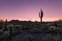 Arizona Desert Sunset Royalty Free Stock Photos