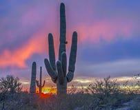Arizona desert sunset with saguaro cactus. Arizona desert sunset with saguaro cactus near Phoenix, AZ royalty free stock photography