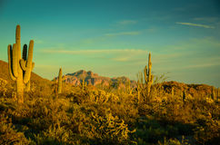 Arizona Desert. Superstition Mountains in Sonoran Desert Royalty Free Stock Image