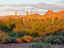 Arizona desert. View of the Arizona desert near Phoenix at sunset Stock Photos