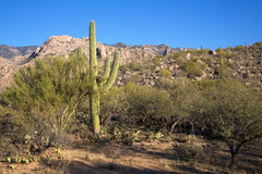 The Arizona Desert Stock Image