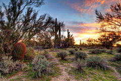 Arizona Desertscape Stockbilder
