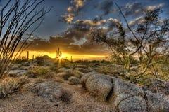 Arizona Desertscape royalty-vrije stock foto