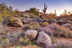 Arizona Desertscape Stock Images