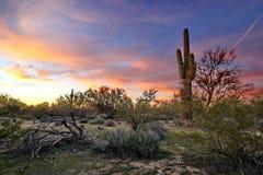 Arizona Desertscape Royalty Free Stock Photo