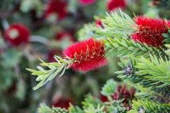 Arizona Flower Royalty Free Stock Photos