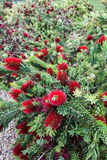 Arizona Flower Stock Photos
