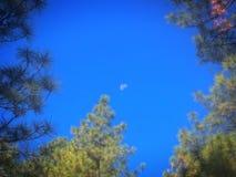 An Arizona Framed Moon Royalty Free Stock Photo
