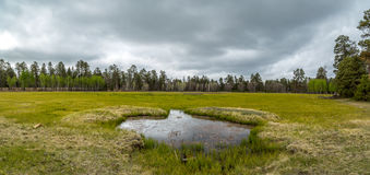 Arizona-Gebirgswüsten-Landschaft lizenzfreies stockfoto