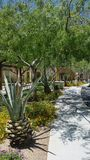 Arizona-Gehweg Stockbild
