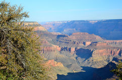 Arizona grand Canyon Royaltyfria Foton