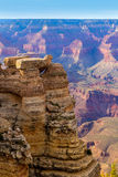 Arizona Grand Canyon National Park Mother Point US Royalty Free Stock Image