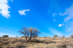 Arizona high desert Royalty Free Stock Images