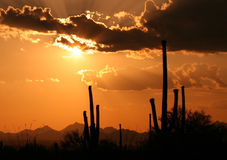 Arizona Hot Sunset. Sunset with clouds and cactus in Arizona Royalty Free Stock Photo