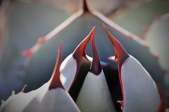 Arizona kaktus royaltyfria bilder