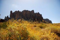 arizona kaktus Arkivfoto