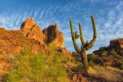 arizona kaktussaguaro Fotografering för Bildbyråer