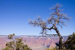 arizona kanjontusen dollar Fotografering för Bildbyråer