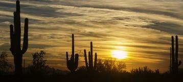 Arizona ökenlandskap, Phoenix, Scottsdale område Arkivbilder