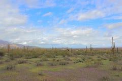Arizona ökenuppehälle Arkivfoto