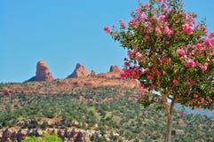 Arizona krajobraz Zdjęcia Royalty Free