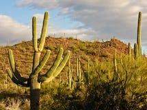 Arizona Landscape Stock Image